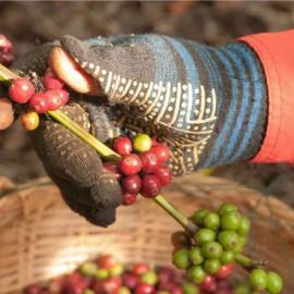 Afriknow: La filiere cafe en Afrique – son impact sur l'economie et l'environnement