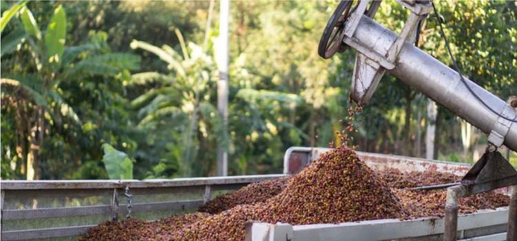 Biomasse – Le biogaz